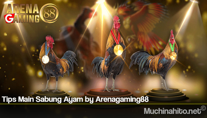 Tips Main Sabung Ayam by Arenagaming88